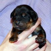 brown 1 week old P1010151