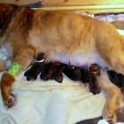 Bod Khyi Ser newborn P1000835