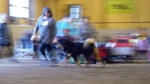 2017 11 12 Hundklubbens utställning i Surahammar.
