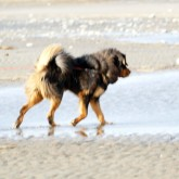 Pite havsbad blury P1070557