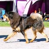 SNKK dogshow P1070688