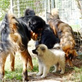 2018 08 18  Midas in dogsyard