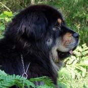 Ruffa 5,5 years old