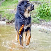 Vanna wading P1290741