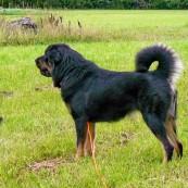 Vanna standing profile P1320499