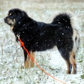 Vanna in snowstorm P1390300