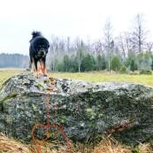 Vanna on a stone P1380769