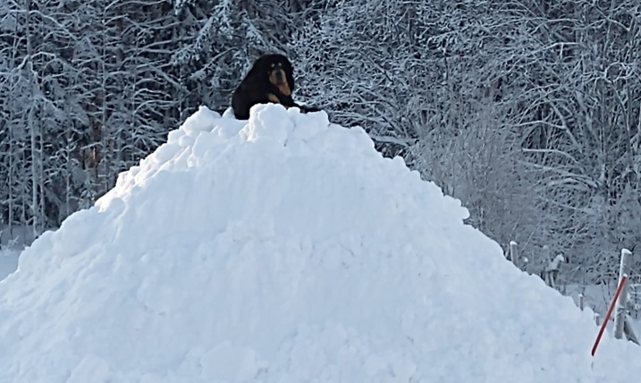 Kaluha on his snow throne 5 year 3 months old. Photo: T Sandström