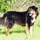 Humla 5,5 years old