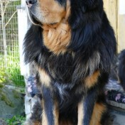 Bacchus 3,5 years old