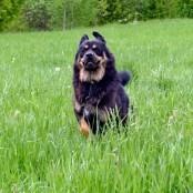 Vanna running in grass P1470464