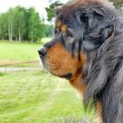 Bacchus profile P1500297