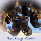 Bod Khyi Khawa litter 12 days old text  P1570818