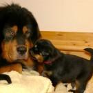 MIkka and Humla girls inbetween P1580326
