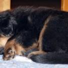 Mikka 4 weeks P1580903