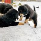 Mikka kissing Lhotse P1610956