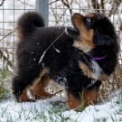 Nilak in snow P1600806