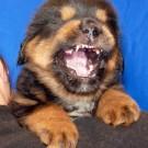 Portrait Nilak teeth P1600251