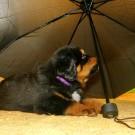 Umbrella and Nilak P1600005