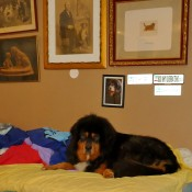 Humla in mummys bed P1620153