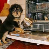Dishwasher and Chilla P1610973