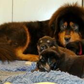 Humla in kitchen with puppies P1580837