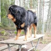 Bacchus in dogsyard P1570991