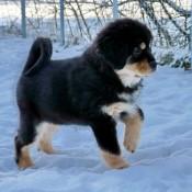 Chilla in snow P1620230
