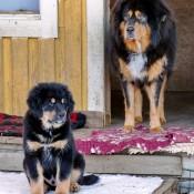 Humla and Lhotse P1630952