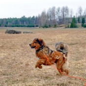 Saffran shedding jumping P1660426