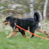 Chilla perfect leap P1690711