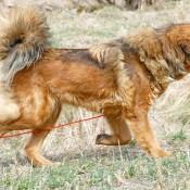 Saffran running elegant from side P1680969