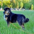 Humla 6,5 years old
