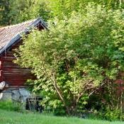 Wooden Bacchus P1730115