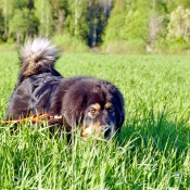 Chilla in tall grass P1710600