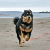 Chilla on the beach full speed P1700583
