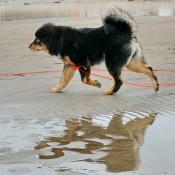 Chilla on the beach best P1700643