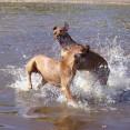 badhundar