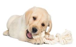Vi på Fyra Tassar i Linköping har alla tillbehör för din hund, hundkoppel, hundhalsband, hundfoder, hundleksaker mm