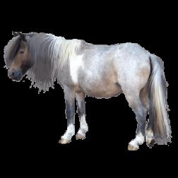 Vi på Fyra Tassar i Linköping har tillbehör till din häst, fodertillskott, vitaminer, mineraler och hästfoder.