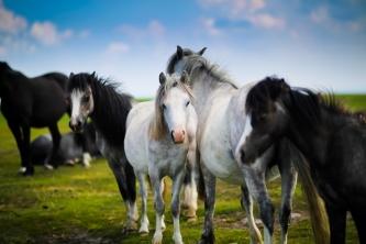 I vårt sortiment finns stallströ, vitaminer, fodertillskott och foder till hästar