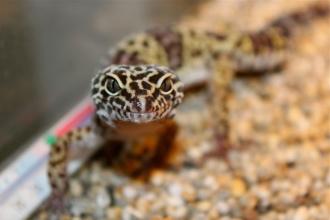 Reptilerna har en egen levandeavdelning hos oss. Här hittar du reptiler, amfibier samt sköldpaddor och tillbehör >