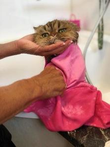 I våra lokaler hittar ni även Studio Cat som erbjuder trimning och pälsvård för framförallt katter men även mindre hundar >