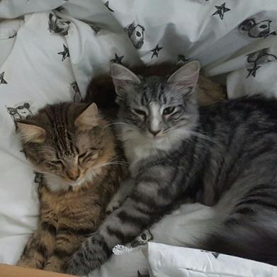 Nellie & Pärla