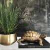 Dekoration Sköldpadda