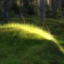 glÑnta i skogen