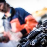 STENUNGSUND  7   20150422_musselsmakning_IMG_8086