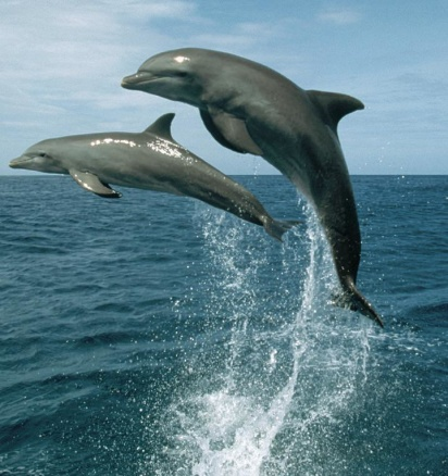 Dolphins are our older wise sisters and brothers.
