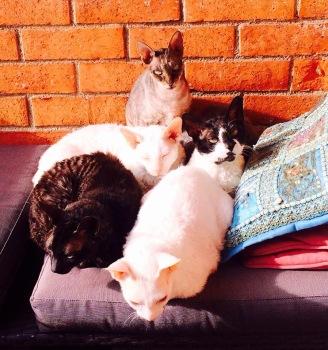 Foto: Alla katter samlade oktober 2015
