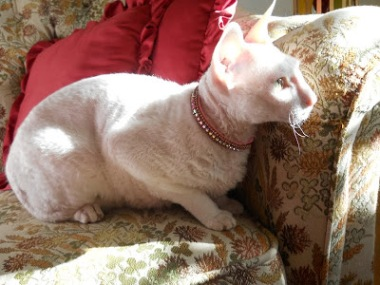 Foto: Bea med halsbandet Prissy in pink, stl Small, 2015